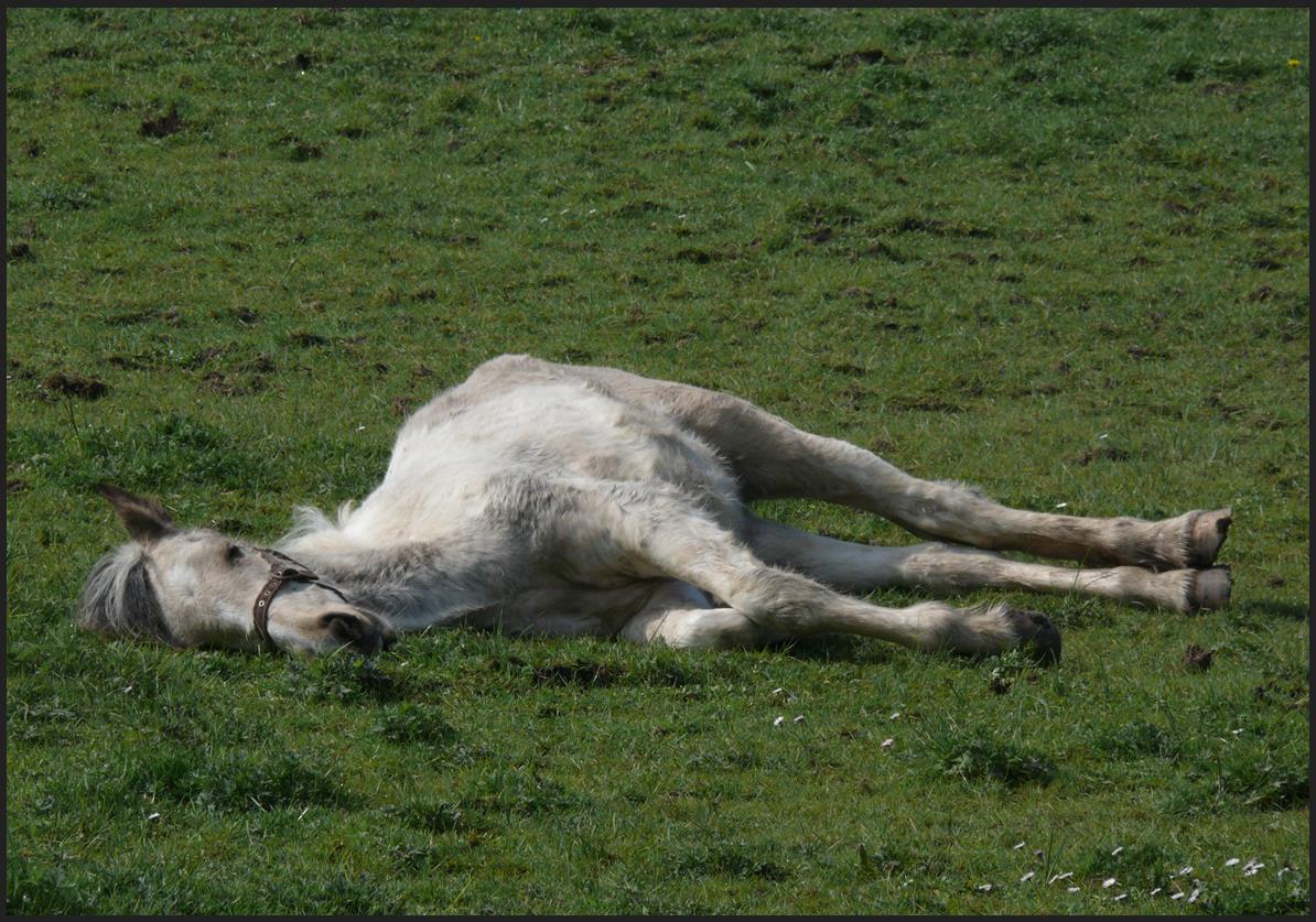 Flat horse